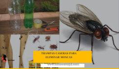 trampas caseras para eliminar moscas